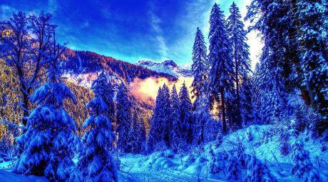 Inte alla människor uppskattar den nordiska vintern.