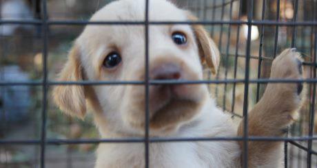 hund ledsen