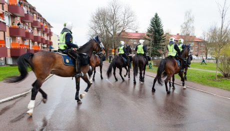 polishästar