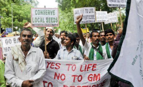 india-farmer-protest-gmo