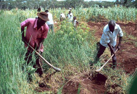 zambian-farmers
